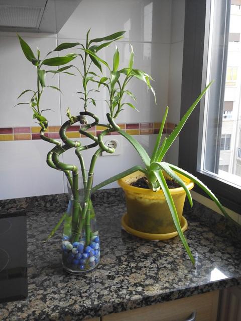 Mis plantas aceptan estoicamente la falta de luz directa (¡y tenerme como cuidadora! :D )